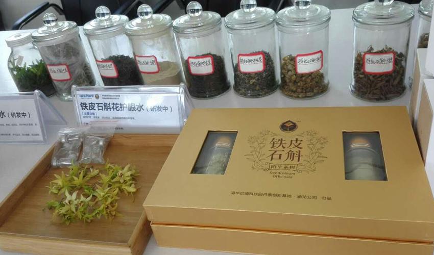 铁皮石斛附生茶树