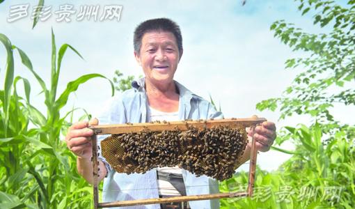 长顺农民工返乡养蜂 酿造甜蜜生活