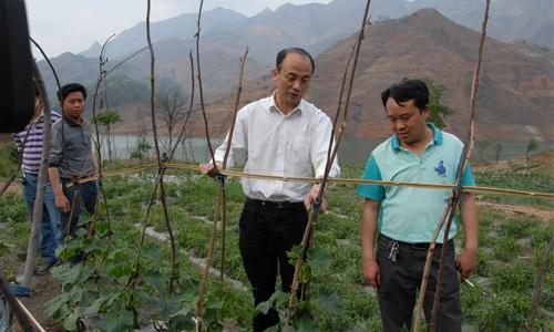 长流乡调研农业产业