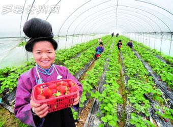 丹寨县党建扶贫掠影