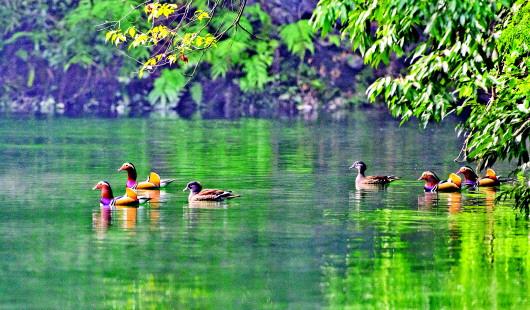 鸳鸯湖生态湿地的诗意栖居
