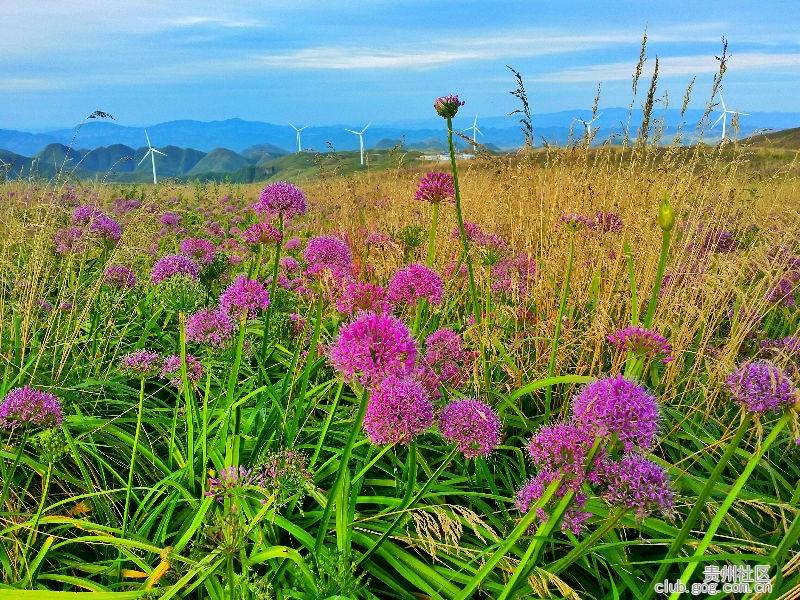 贵州明信片|摄影・最美绿色