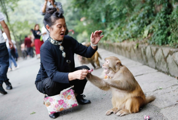 """黔灵山上猴子竟然也有""""帮派""""!"""