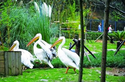 贵阳市黔灵山公园动物园恢复开放 72种动物入住