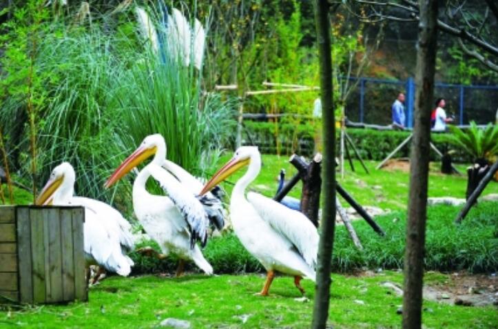 贵阳市黔灵山公园动物园恢复开放