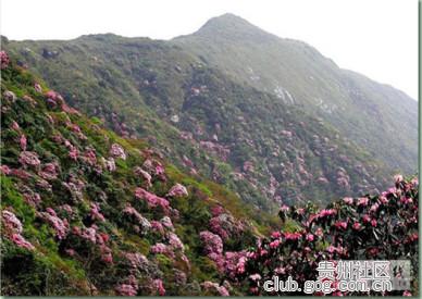 """【""""我和多彩贵州""""征集活动】来贵州看杜鹃花,你需要这个攻略"""