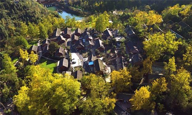 航拍世界古银杏之乡 ――贵州妥乐