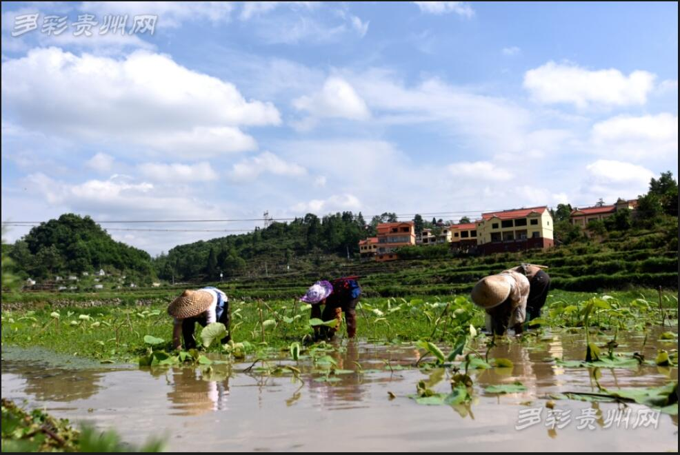 村民仍在辛勤耕作