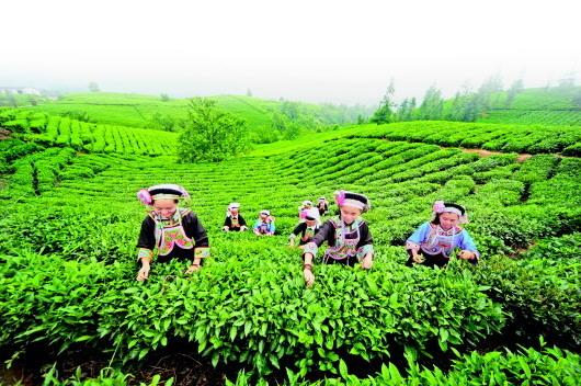 """让绿色农产品""""泉涌"""" 贵州风行天下"""