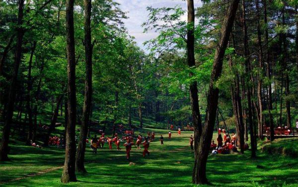 """穿过屏幕 来贵州这些""""森林氧吧""""尽情呼吸吧"""