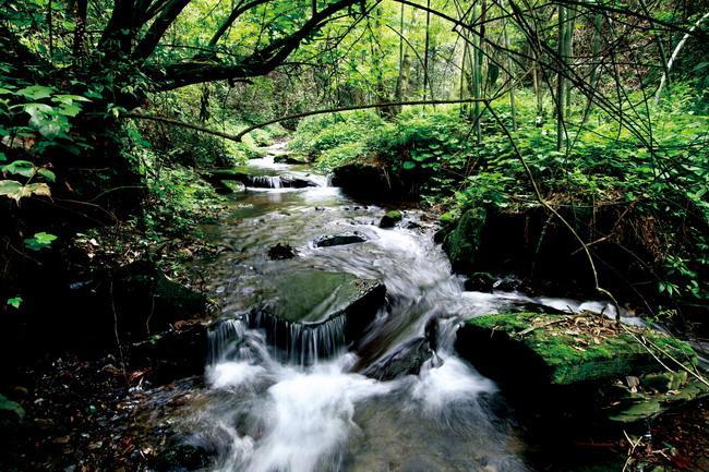 贵州最美的国家级森林公园