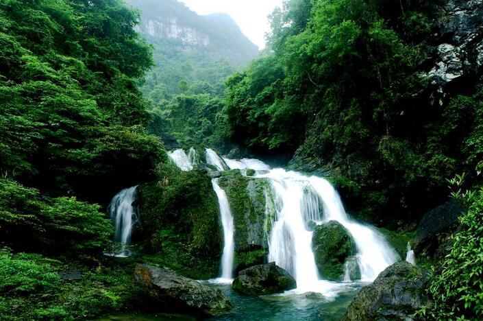 构成了独特的喀斯特自然景观:上有森林下有石林,石头上长树,石缝里