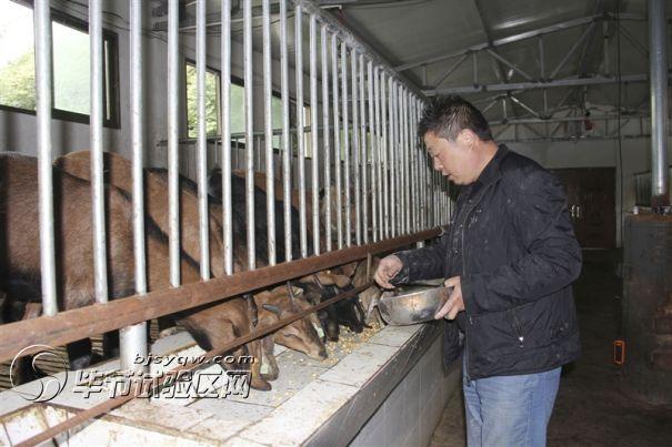 努比亚山羊种羊基地