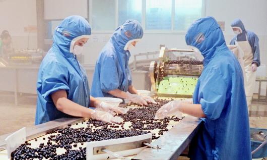 麻江:从无到有的蓝莓特色产业路径