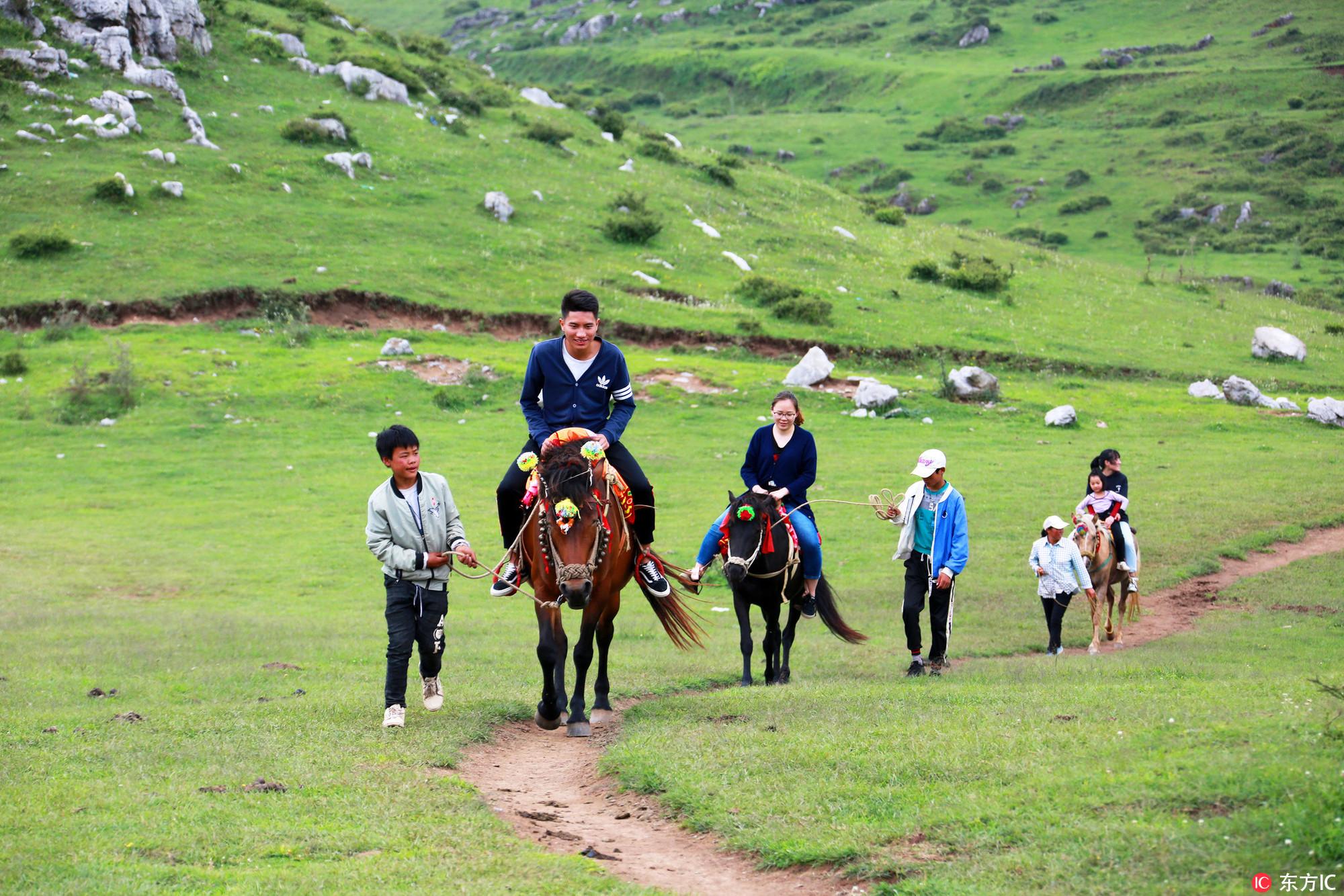 位于贵州省威宁县盐仓镇和板底乡境内的百草坪草场面积约12万亩,海拔