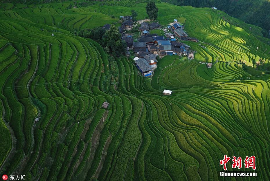贵州加榜梯田盛夏好光景 如绿色丝带沁人心脾
