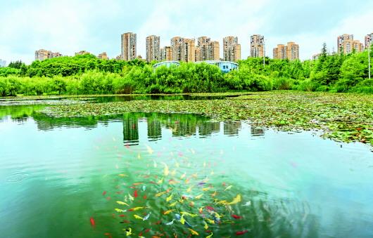 年方十八观山湖 从一片荒凉到满城繁花