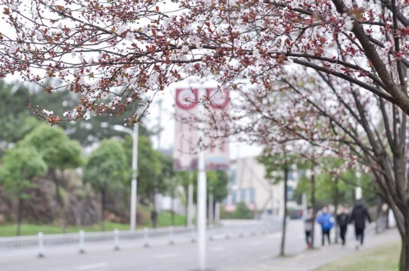 早春三月的贵大,美呆了!