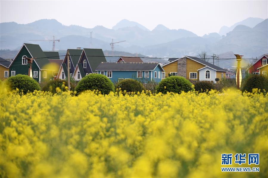 """贵州余庆:""""花经济""""带动乡村旅游"""